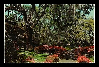 Us Postcard Romantic Spanish Moss Overhangs Colorful Southern Garden