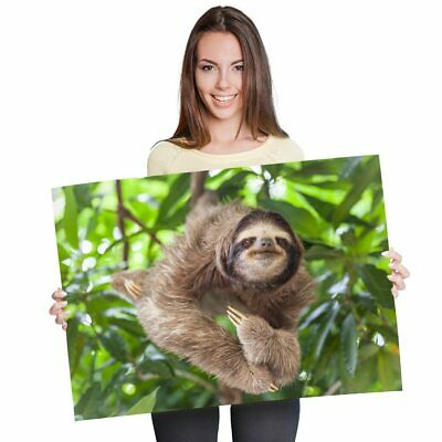 Funny Cute Lazy Sloth Poster Print Size A4 A3 Wild Animals Poster Gift #8487