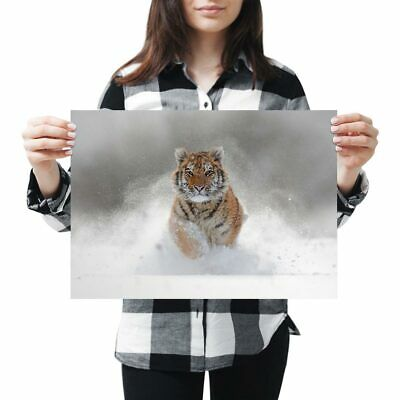 A3 - Awesome Siberian Tiger Big Cat Snow Poster 42X29.7cm280gsm #8600