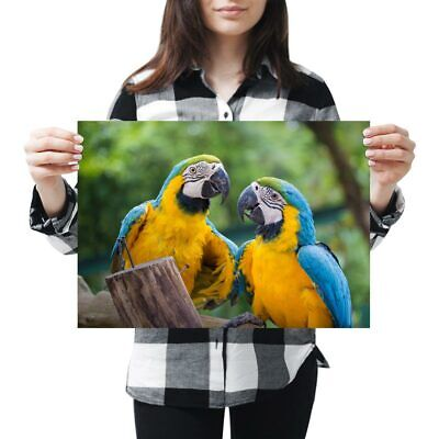 THE PARROT Animal Poster 3511 Photo Picture Poster Print Art A0 A1 A2 A3 A4