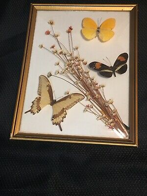 Vintage Butterfly Dried Flowers Shadowbox Framed Taxidermy Wall Art