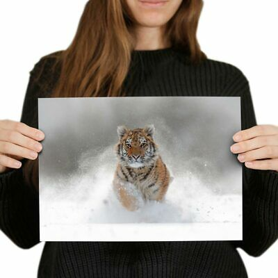 A4 - Awesome Siberian Tiger Big Cat Snow Poster 29.7X21cm280gsm #8600