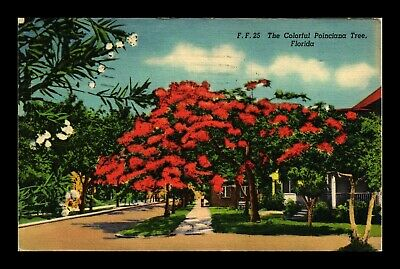 Us Linen Postcard The Colorful Poinciana Tree In Full Red Bloom Florida