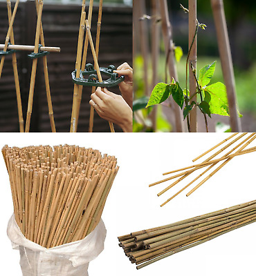 Bamboo Canes Plant Sticks Garden Plants Vegetables Support Flower Cane 2-7ft New