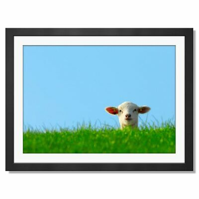 Adorable Sheep Poster Print Size A3 Nature Animal Art Poster Gift #15582 A3