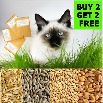 Organic CAT PETS GRASS SEEDS Oat Wheat Barley Rye in Eco Paper Bag GET 2 FREE