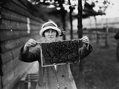 OLD PHOTO Beekeeper Holding A Beecovered Honeycomb In A Frame 1923