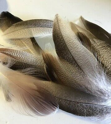 50pcs Mallard Duck Barred Mottled 5-15cm Natural Feathers DIY Craft Fly Fishing