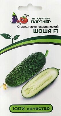 Seeds from Russia. TROYA F1 Cucumber Non-GMO