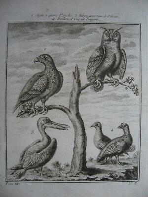 CANADA 1759 Engraving from PREVOST VOYAGES Eagle Owl Pelican Partridge H Rooster