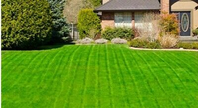 1Kg Hard Wearing Lawn Seed - Johnson's Brand - Premium Quality