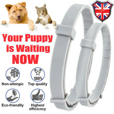 Adjustable Anti Flea&Tick Neck Collar Strap For Dog Cat Kitten Pet Protection UK