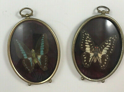 2 Metal Vintage Framed Butterfly Taxidermy