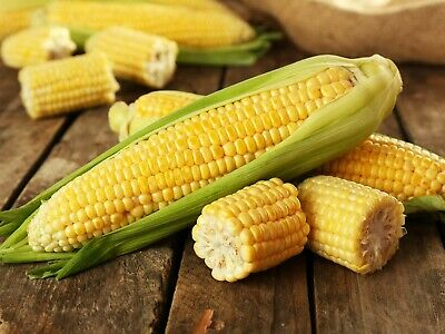 10 x sweetcorn plants swift