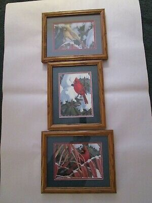 CARDINAL Framed Wall Art Picture Set of 3 FRAMED AND MATTED Gorgeous
