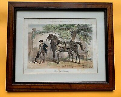 Anglo-Navarrine Horses, - French Antique, hand Colored Lithography