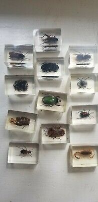 Rare Vtg (12)  Bug Insect Collection In Clear Lucite