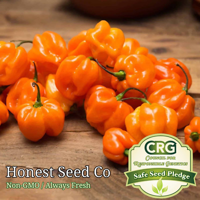 25 Fresh Seeds From Orange Black Panther Hot Pepper-O 035