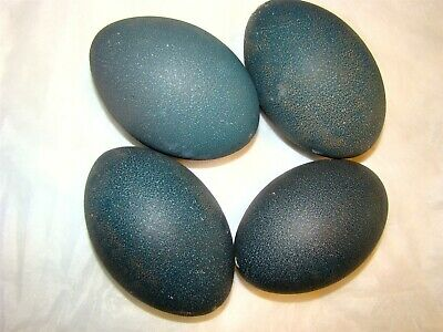 EMU EGGS FOR CRAFTS OR DISPLAY 2 DRILLED AND CLEAN LOT OF TWO