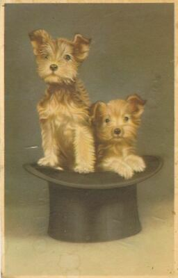 RARE Vintage Dog Postcard 2 Border Terrier Puppies in Top Hat Belgium 1958