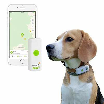 Weenect Dogs 2 - The world's smallest GPS tracker for dogs