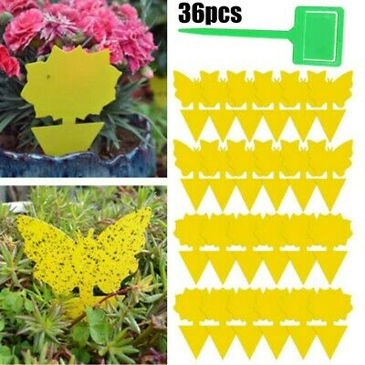 36 X Sticky Trap Fruit Fly Gnat Trap Yellow Sticky Bug Trap For Outdoor Indoor