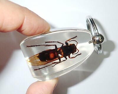 Tropical Tiger Hornet Insect Specimen Large Key Ring SK12 Clear