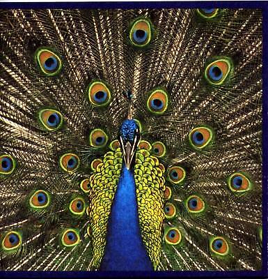 *CD - THE BLUETONES - Expecting to fly