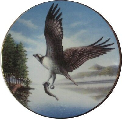 """Royal Doulton England Pre Yr 2000  """"lord Of The Sky"""" The Osprey Pn33 Mint In Box"""
