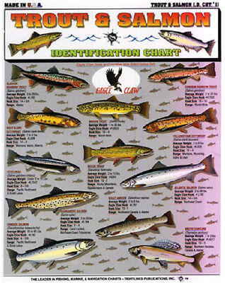 TROUT & SALMON - ID Chart - Tightline Tightlines Publications #11