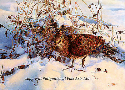Game Bird, Woodcock Christmas cards pack of 10 by Jon Pointer C398x