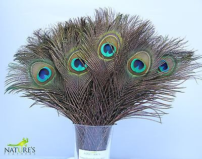 100pcs Real Natural Peacock Feathers (approx. 10-12 inches)