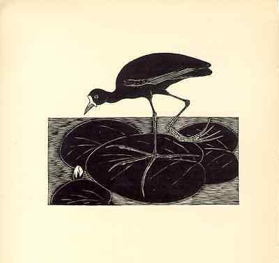 1928 AWESOME B&W etching: JACANA  bird