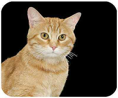 Mouse Pad Custom Thick Cat Mousepad - Yellow Cat - Add Any Text Free