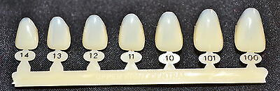 #8 Upper Right Central Anterior - Dental Polycarbonate Temporary Crowns 7 sizes