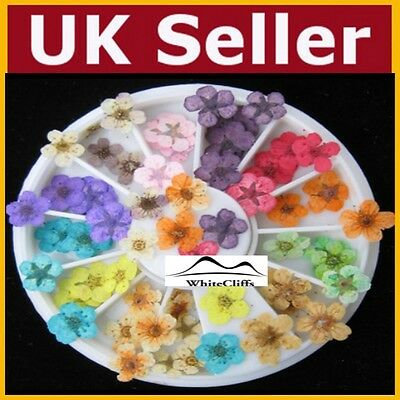Dry Flower False Nail Art Dried Fake Nail Tips Rhinestones Gems Nails UK SELLER