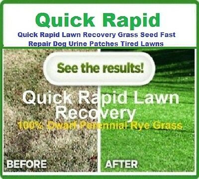 Quick Rapid Lawn Recovery Grass Seed Fast Repair Dog Urine Patch Tired Lawns
