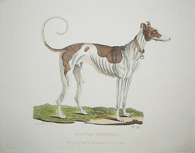 Greyhound Windhund Umrissradierung GÖTZ 1853