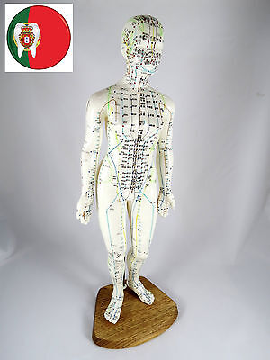 Professional Medical and Educational Acupuncture Female Body Model 48cm ARTMED