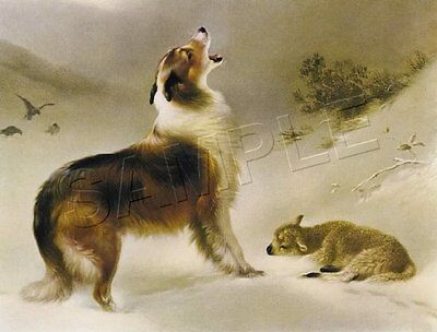 "COLLIE Sheltie Dog FOUND Lamb SHEPHERD'S CALL Giclee Art Print - LARGE 19"" x 13"""