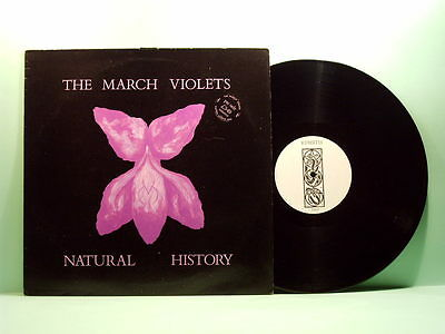 March Violets - Natural history