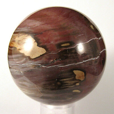 GORGEOUS!!!  Petrified Wood Sphere  w/ GREAT COLOR - Madagascar   EPW077