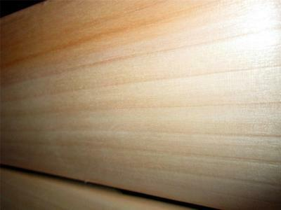 Pro Quality Type A English Willow Cricket Bat - Nurtured in the UK