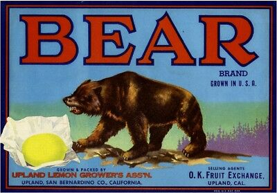 Upland Grizzly Brown Bear #3 Lemon Citrus Fruit Crate Label Art Print