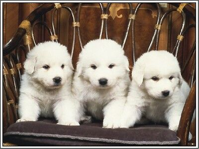 4 Dog Great Pyrenees Puppy Dogs Puppies Stationery Greeting Notecard/ Envelopes