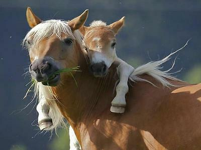 4 Horses Mother and Foal Horse Greeting Notecards/ Envelopes