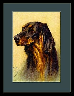 English Print Gordon Setter Dog Head Study Dogs Art Picture Poster
