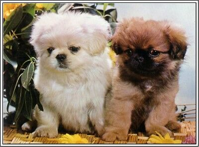 4Pack Dog Puppy Pekingese Dogs Puppies Stationery Greeting Notecards/ Envelopes
