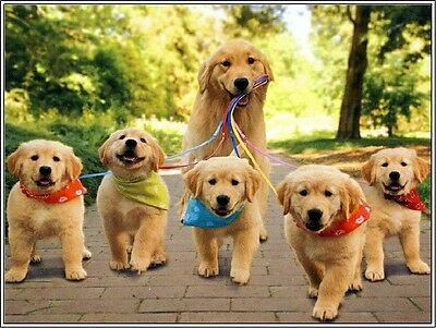 Packof4 Puppy Dog Golden Retriever Dogs Puppies #7 Greeting Notecards/ Envelopes
