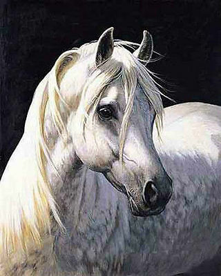 Hot sell new Huge WALL Modern horse decorative Oil Painting Canvas   065